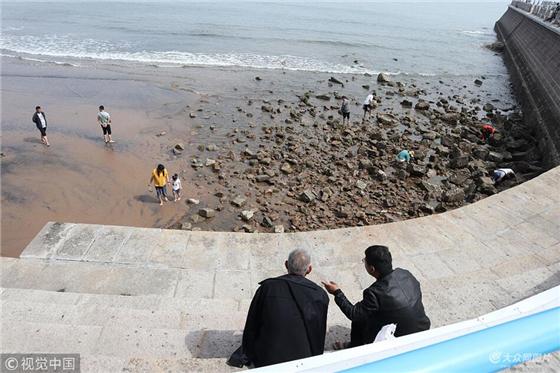 在青岛前海栈桥风景区,八大关风景区,许多游人下到滩涂礁石区游玩赶海